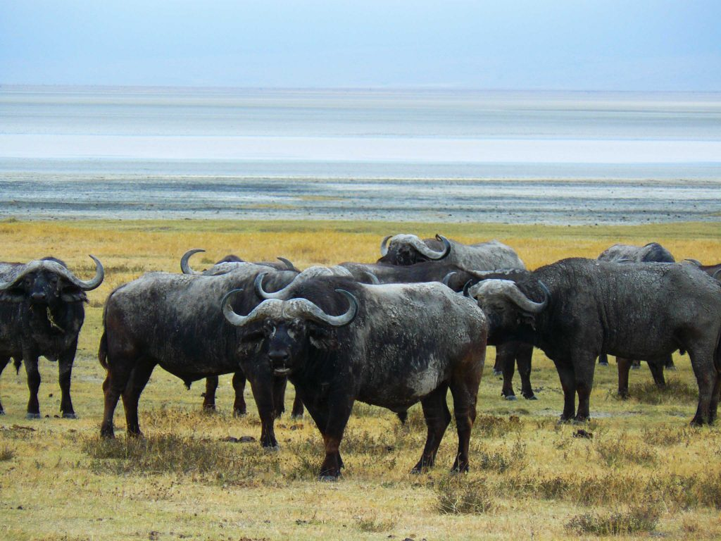 Cratère Ngorongo