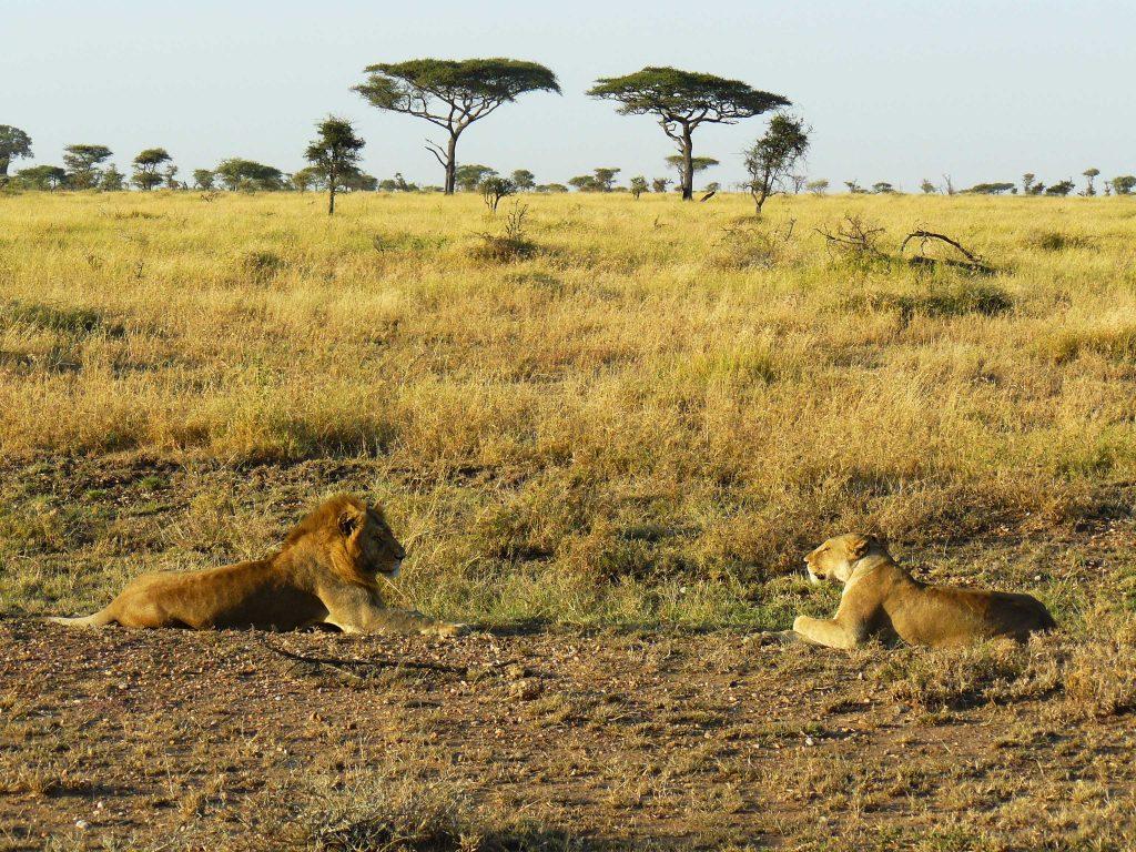 Parc Serengeti