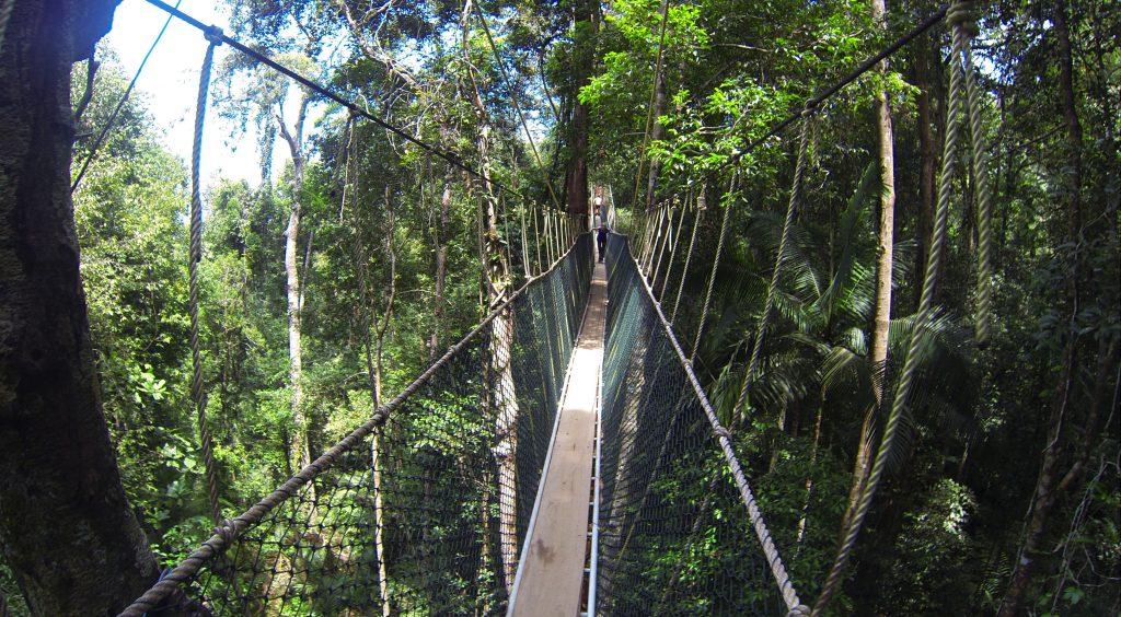 canopy-walk-taman-negara