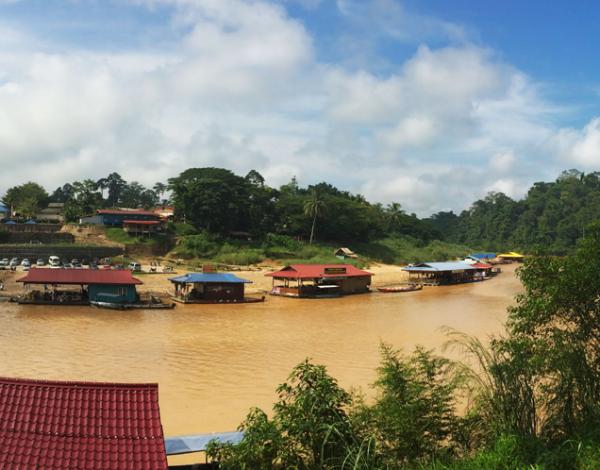 Malaisie : La jungle du Taman Negara