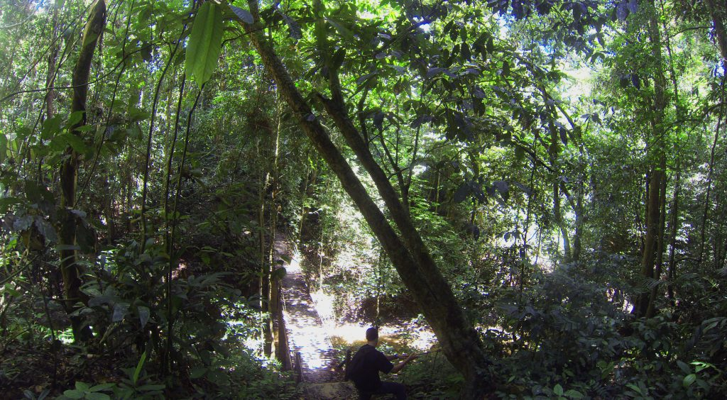 jungle-taman-negara