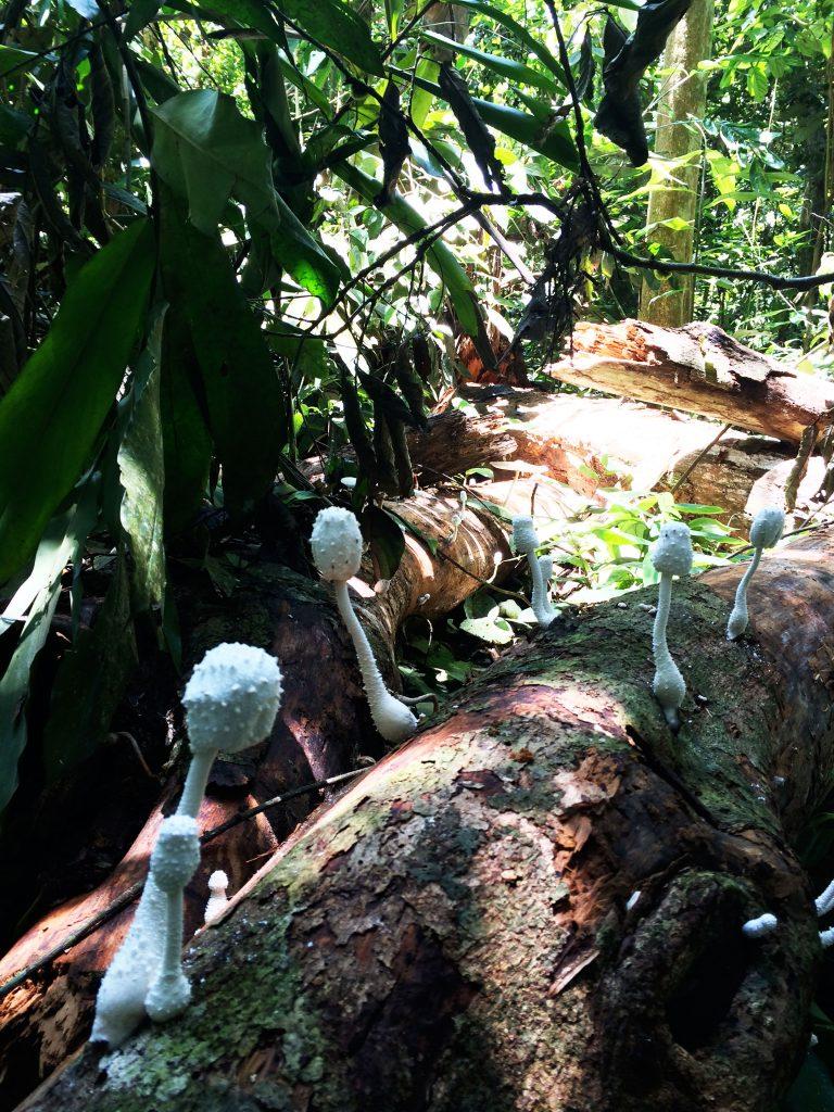 taman-negara-flore