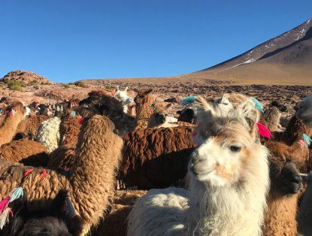 Visiter le Pérou et la Bolivie en 3 semaines
